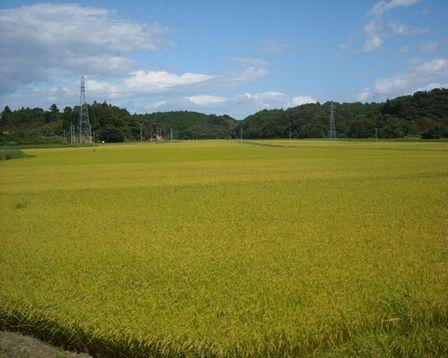 東松島市根古地区の水田風景